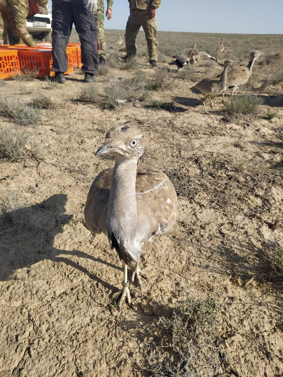 Release of animals and birds into the natural environment